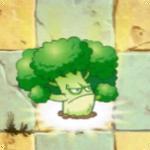 Vigorous Broccoli PF1