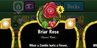 Briar Rose/Gallery