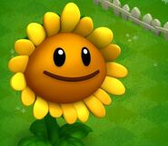 Adv-Sunflower