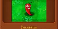 Jalapeno/Gallery