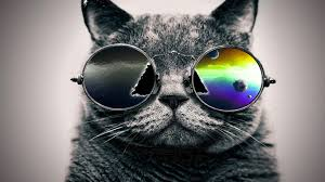 File:Catglasses.jpg