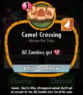 CamelCrossingHDescription