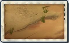 File:Wild West Seed Packet.jpg