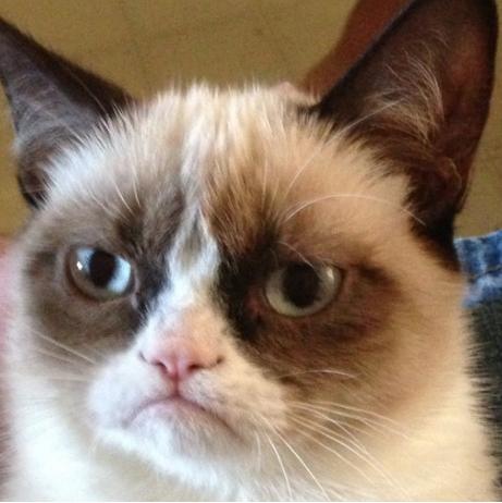 File:Grumpy catt.png