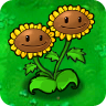 Twin Sunflower1