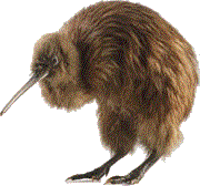 File:Kiwi bird.png