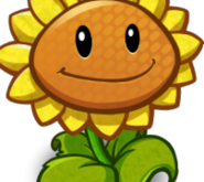 SunflowerCardImage