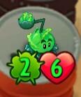 CabbagePultisShrunken