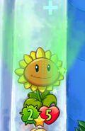 Sunflower Heal
