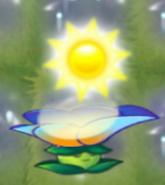 Moonflower 50 sun