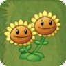 Twin SunflowerAS