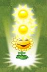 Sunflower PF