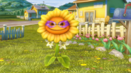 Customized sunflower, better quality.