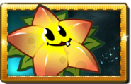 Starfruit New Premium Seed Packet