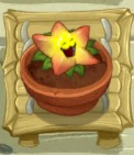 File:Starfruit PvZ2 watered ZG.jpg