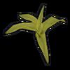 Corn Clone icon