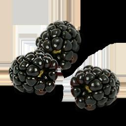 File:Black Raspberries icon.png