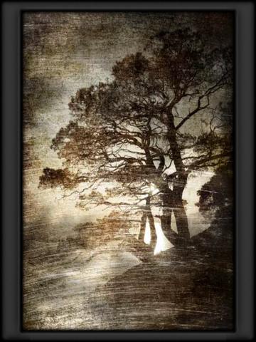 File:Tree Art Habitat.png