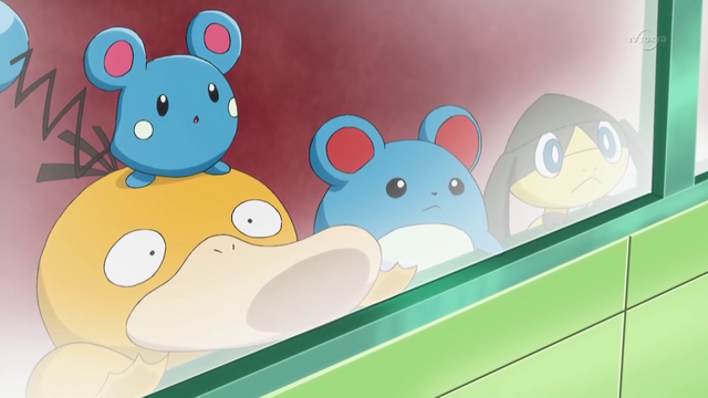 File:Professor Sycamore's Psyduck Azurill Marill and Helioptile.png