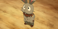 Clemont's Bunnelby