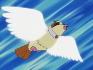 Trainer School Pidgey Wing Attack