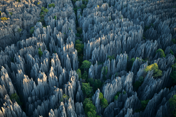 File:Stone-Forest.jpg