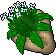 Big Flower Plant
