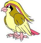Zangoose Pidgeot