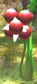 File:Burgoening spiderwort.jpg