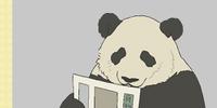 Full Time Panda
