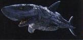 Shark Galactabeast