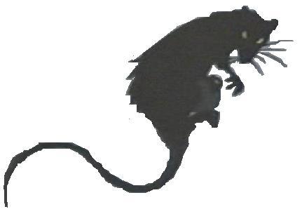 File:The Rat.jpg