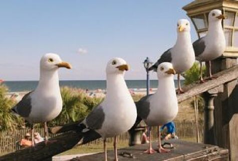 The Seagull Crew