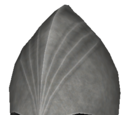 Noldor Infantry Helm