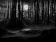 Devils Garden-Forest