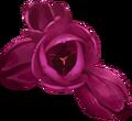 Flower-heads-lrg.png