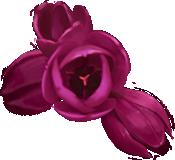 Flower-heads-lrg