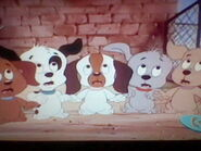 Five Scared Puppies
