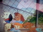 Buddy, Bob, and the Pound Puppies