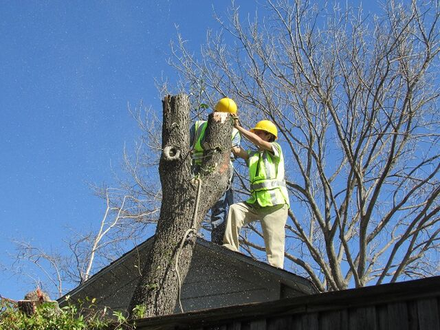 File:DFW Tree Removal - Dallas Tree Service - 214- 556-5079.jpeg
