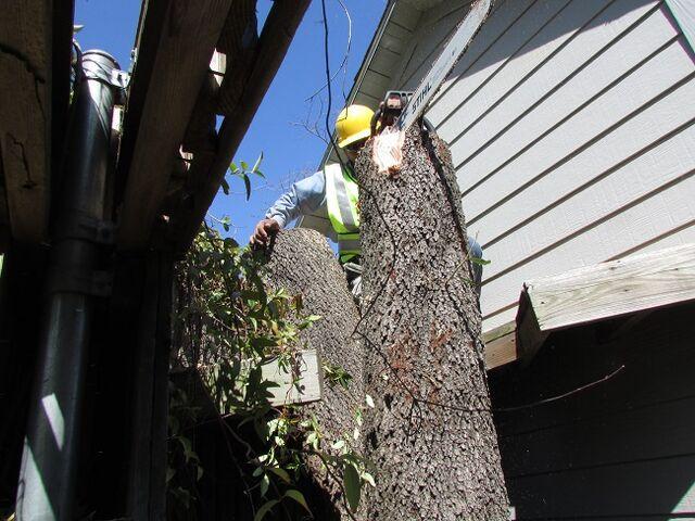 File:Dallas Tree Removal - Dallas Tree Service - 214- 556-5079.jpeg