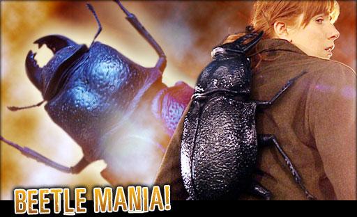 File:Char beetle.jpg