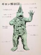 Gurion's anatomy