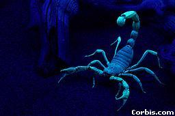 File:Scorp.jpg