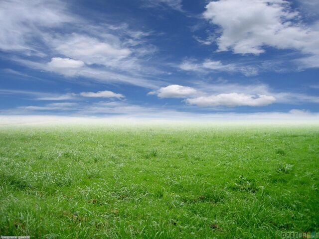 File:Green grass and blue sky 1280x960.jpg