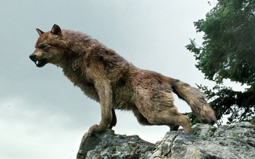 File:Werewolf-jacob-black-9197526-600-400.jpg