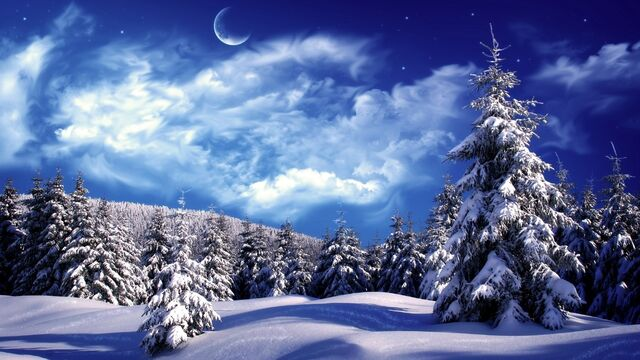 File:Wallpaper Forest Winter Night.jpg