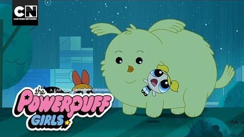 Powerpuff Girls Cheepy Returns Home Cartoon Network
