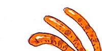 Zakyura