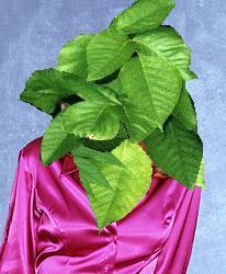 File:Ivy.jpg